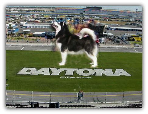 Daytona_SP_website